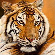 """Plexiglas  """"TIGRE""""  de 65 x 65 cm"""