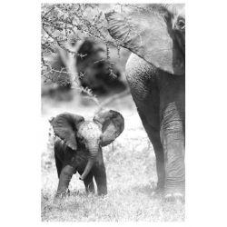 """""""ELEPHANT et son Petit"""" Décoplex 80 x 120 cm"""